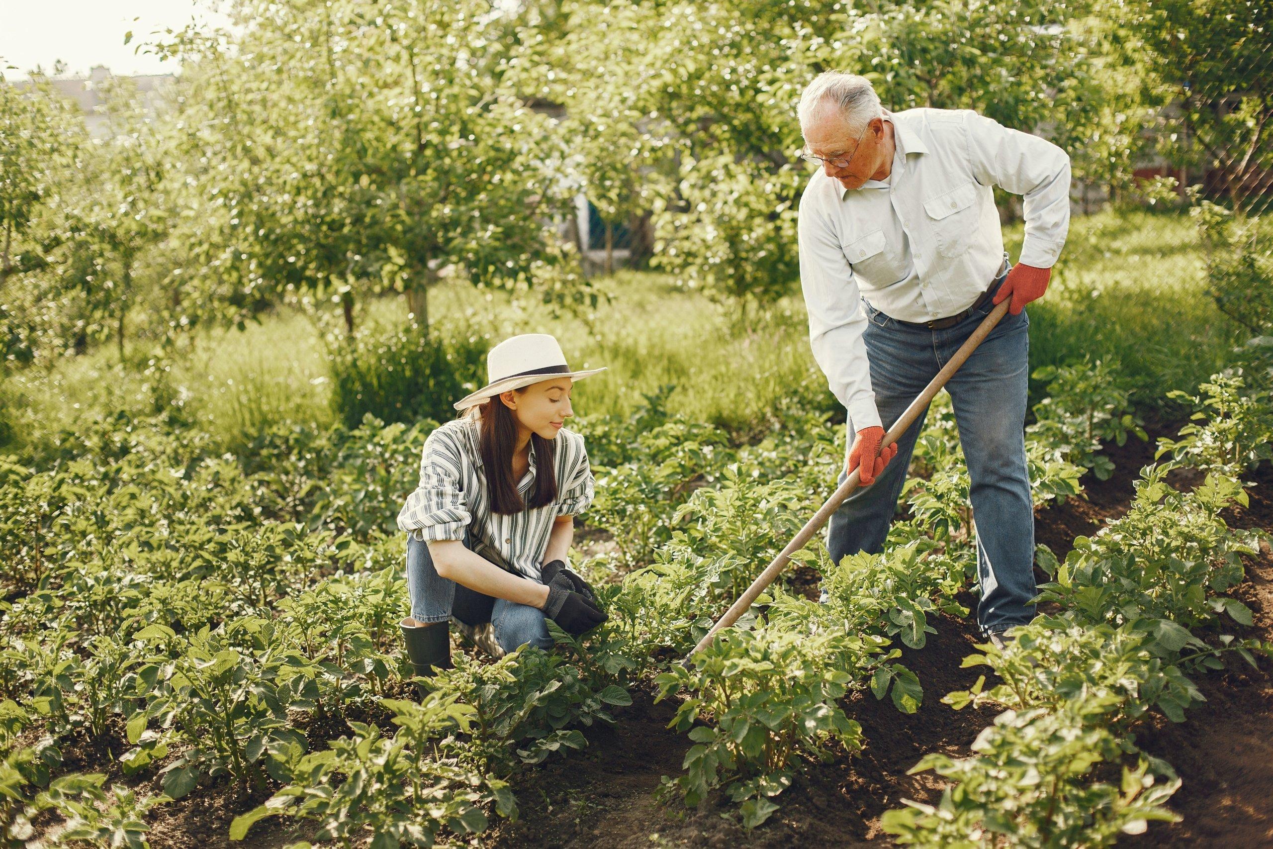 plantations au printemps : arbres, fleurs, fruits, légumes, potager
